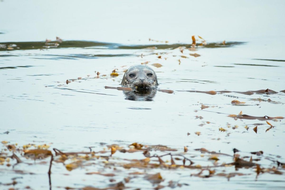 Photo Gallery – Wildlife